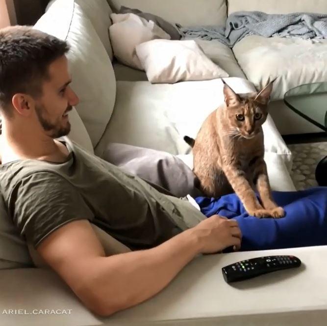 貓咪做錯事塞乃賠罪 用喵掌「幫主人按摩大腿」:原諒人家嘛~