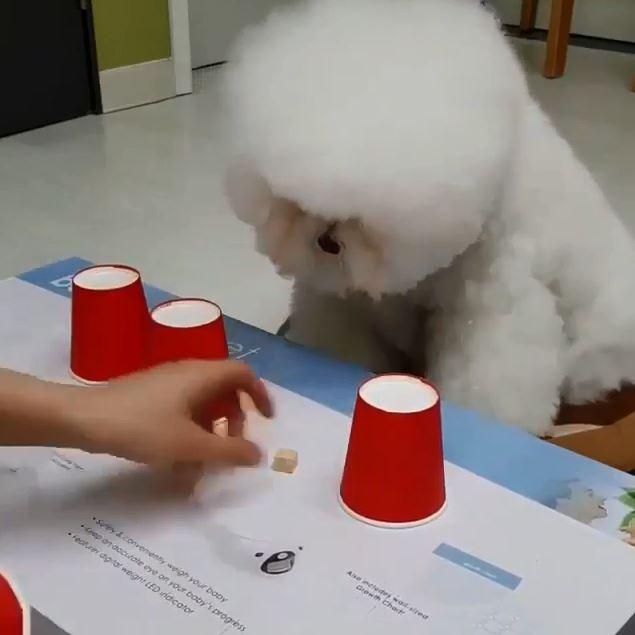 命中率100%!猜零食「杯子大挑戰」 雪球狗:林北眼睛乾到起霧...