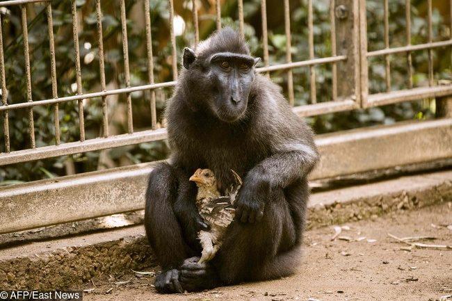 19張見證「動物跨越種族的愛」照片 猩猩餵老虎喝ㄋㄟㄋㄟ太溫馨~