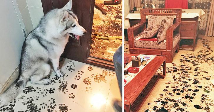 18張寵物們犯蠢又闖禍的爆笑照 法鬥「咬壞2萬掃地機器人」超得意