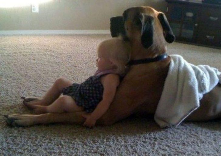 25張照片看到「狗狗對人類滿滿的愛」 趴地上教小主人爬行:來~像這樣