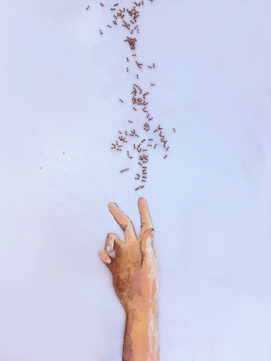 藝術家把糖放在紙上 螞蟻前來覓食「排成驚人圖畫」!