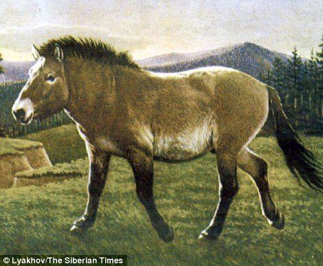 科學家發現「冰凍4萬年小馬化石」 毛髮內臟都完整保存!