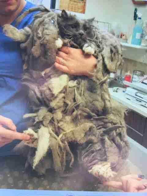 收容所撿到「厚重毛怪」痛苦無法行走 剃下2公斤廢毛後模樣超驚艷!