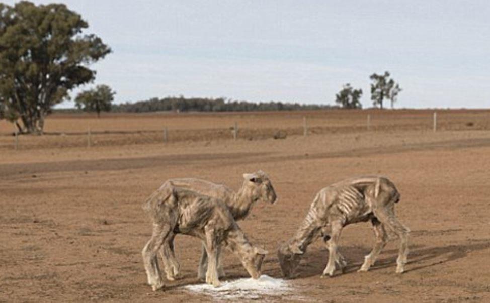 袋鼠「站立白骨照」雙手伸直:救救我...  乾旱畫面讓人想落淚!