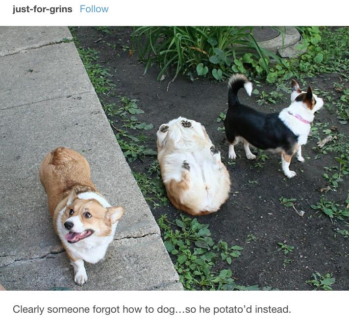 17張讓你忍不住想問「你還好嗎?」狗狗照 變成馬鈴薯太可愛❤
