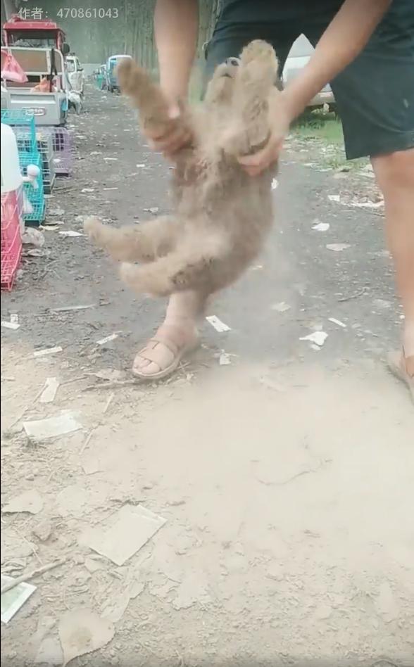 小屁狗自當土撥鼠玩瘋 主人「抓著灰塵抖不完」:你是去沙漠嗎?