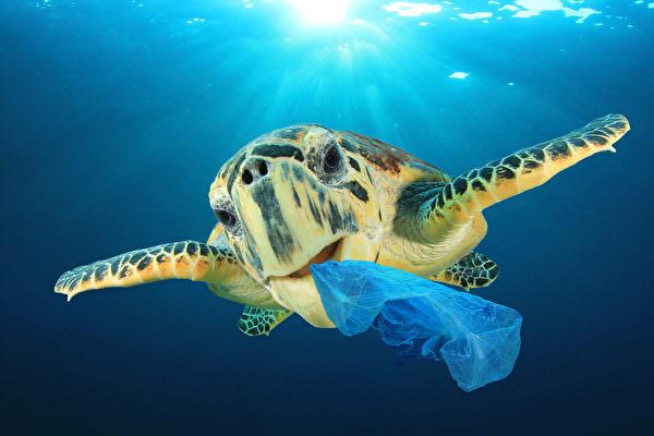 比甘蔗吸管還猛!「水溶塑膠袋」下水2分就溶化 屁孩想套頭玩「流眼淚立刻破裂」