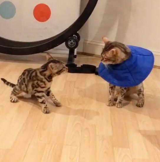 貓哥受夠「小弟挑釁」 藍領階級爆氣揮貓拳:你再給我說一句!