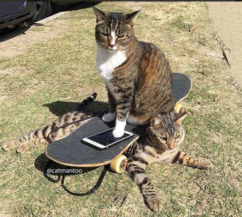 給老子閃開!滑板貓淡定溜過人群 「後腳肉球」高冷蹬上板帥爆