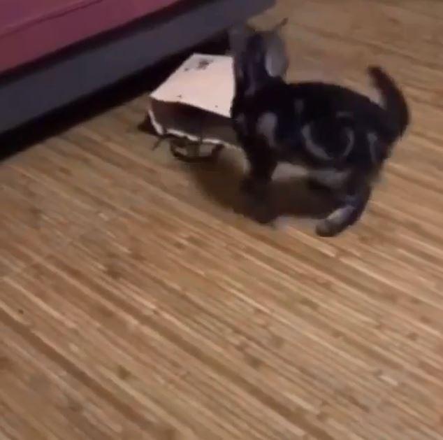 真實版躲貓貓!大喵突襲小喵失敗 「瞬間消失」傻眼:欸?剛不是還在?