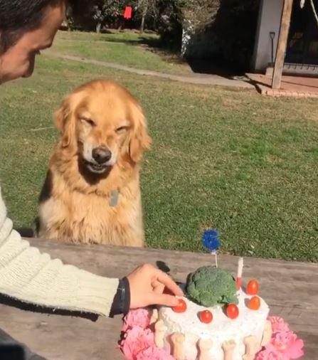 為什麼要碰我的蛋糕!阿金生日「老爸偷走小番茄」 暴怒露牙齒:拿開你的手啦