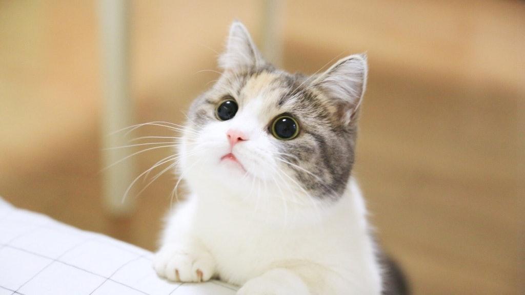 要走了為什麼不告訴我?貓咪突離世奴才內疚不已 網友解惑:那是他給你的特權
