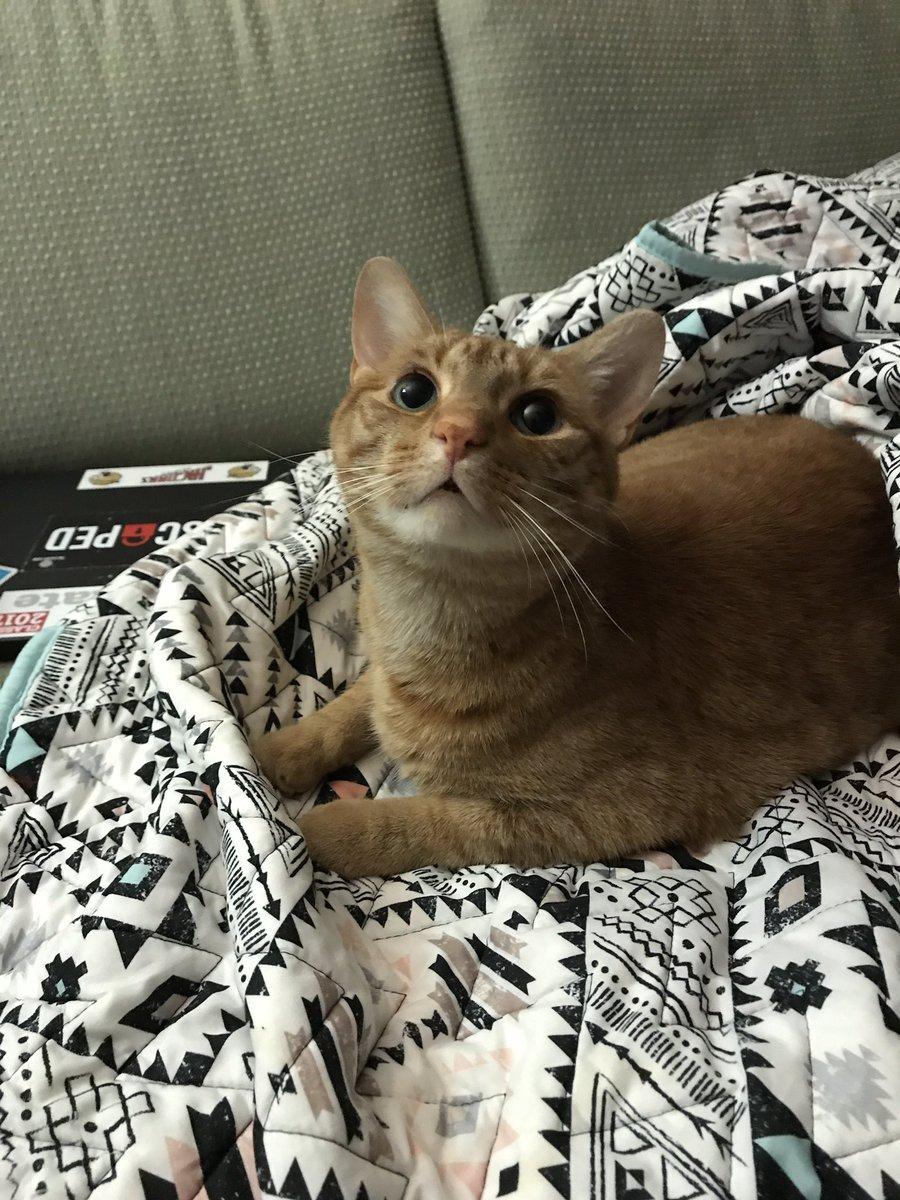 爸媽著急為女兒「貼文借橘貓」 網友搶PO愛貓照:選我選我!