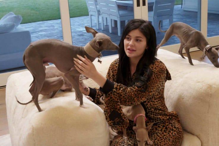 羨慕還忌妒?身價270億凱莉珍娜「24種揮霍方式」 150萬買1隻狗...