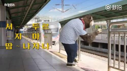 顛覆樹懶慢吞吞!「佛性上班族」趕地鐵 喝下神奇飲料時速變120up XD