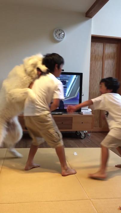 影/奧兄弟又吵架了...狗保母看不下去用力一撲:逼我「抱緊」嗎?小P孩