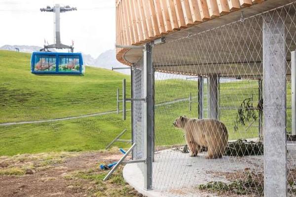 一輩子在馬戲團...悲催棕熊第1次踏上草地 露出「天堂笑容」:這是自由的味道嗎♥