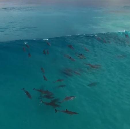 一群海豚突然潛伏在水底 浪花一來「花式翻筋斗」比人類更會玩!