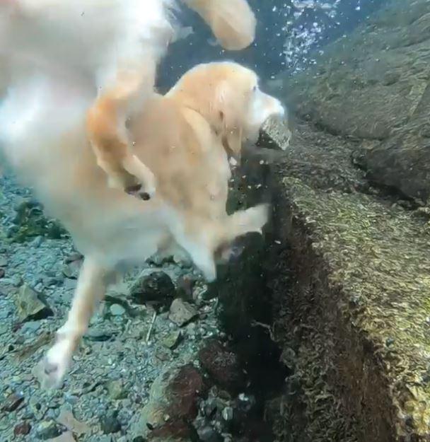好友掉到水裡了QQ 金金使出滿等「潛水技能」:我...我一定要拯救你!