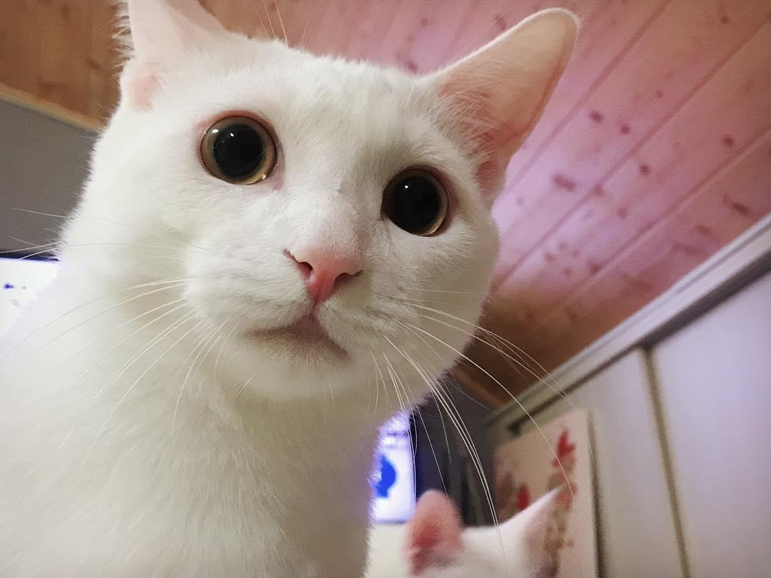 辣媽開門主子們溫馨迎接♥ 一轉到「詭異黑眼」貼臉:東西帶回來沒有?