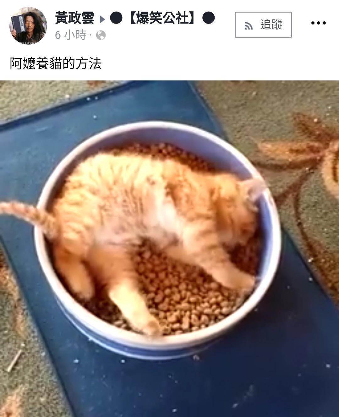 影/阿嬤是這樣養!小橘貓「爽躺飼料碗」 迷幻旋轉:啟動本王暴肥狀態