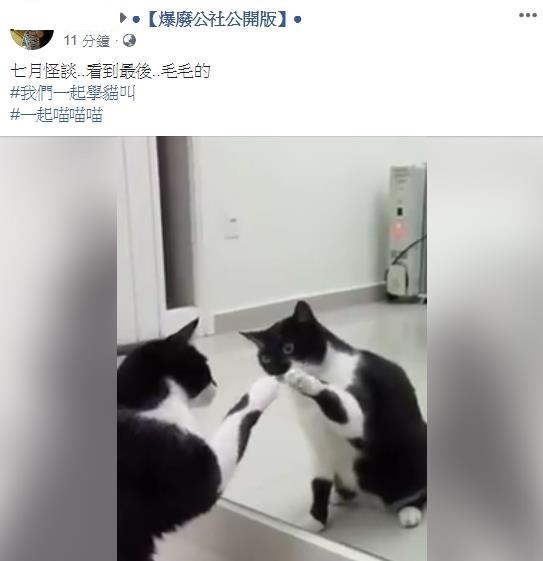 小萌貓跟鏡子裡的自己玩好High 看到最後大家尖叫:為什麼…轉頭了!
