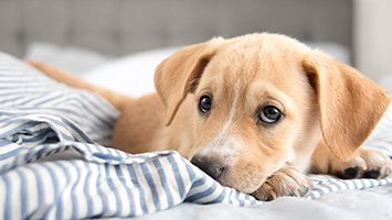 為什麼連狗都討厭我...瞬間靠近拍狗頭是禁忌 專家:想打架才這樣做!