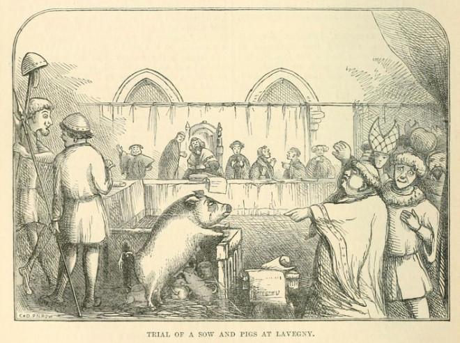 動物也要打官司!中世紀歐洲要求動物「遵守法律」 不服法的通通來辯