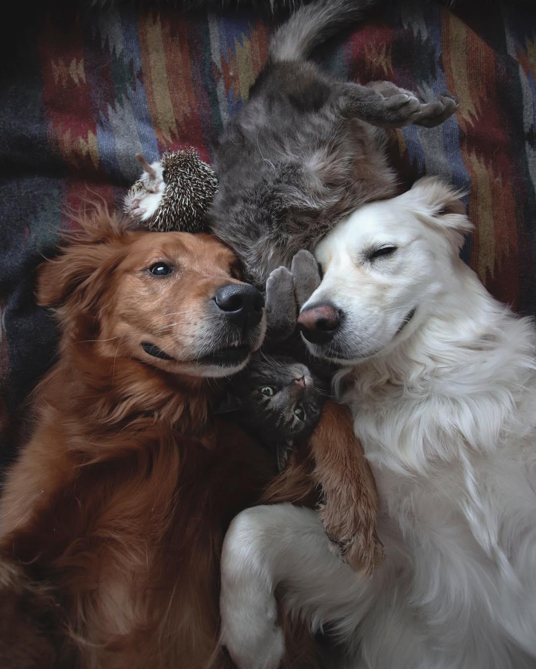 兩狗把喵星人當親兒子 狂用「愛的口水」洗臉:幫你添上汪的味道~