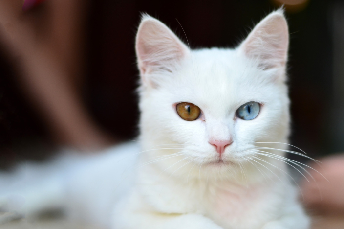 「毛色影響個性」的都市傳說...橘貓愛吃話又多 三花貓是搗蛋鬼:都誤會本王了...