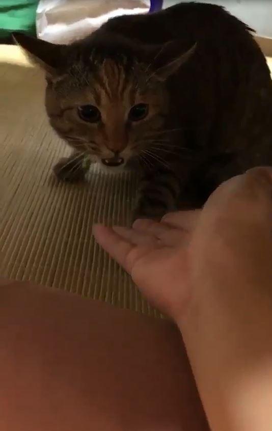 偷摸浪浪被抓包 吃醋喵「發飆大吼」:我聞到她的香水味了,休想碰我!