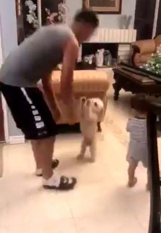 把拔抱兒子飛高高 一放下立馬「呆汪高舉小肥手」:換我啦~~~