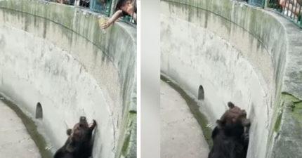 小屁孩假裝「倒水出來」熊熊超興奮 就在合嘴後貼牆懊惱:X!被騙了...