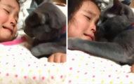 暖心貓皇貼臉安慰小主人 霸氣「伸手幫擦淚」:別哭,有我在♥