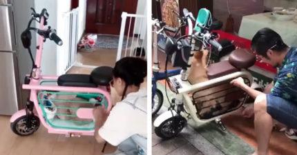 影/把毛孩整隻「裝進腳踏車」的方便設計 狗奴興奮:哪裡買得到!