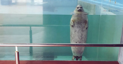 水族館驚見「鬼修女海豹」太陰森 近拍突然自轉圈圈:偶還是萌萌的~