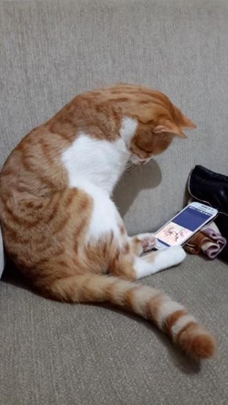 悲傷貓抱手機緬懷已逝主人!網瘋傳「邊看邊哭」主人無奈:你才已逝啦…