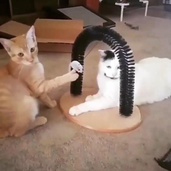 絕對有心結!小橘貓手握假老鼠 趁白貓不注意放手彈牠臉:誰叫你要偷吃~