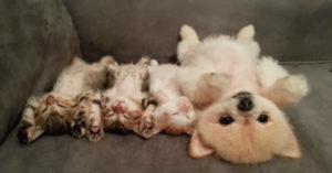 睡魔忽然來襲...貓皇跟萌汪停戰全部睡一團 「粉紅肉球大放送」:被療癒了❤