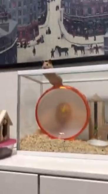 鼠版惡魔島!大半夜翻牆越獄卻卡住 老鼠尷尬撐起身子:只差一步啊…QQ