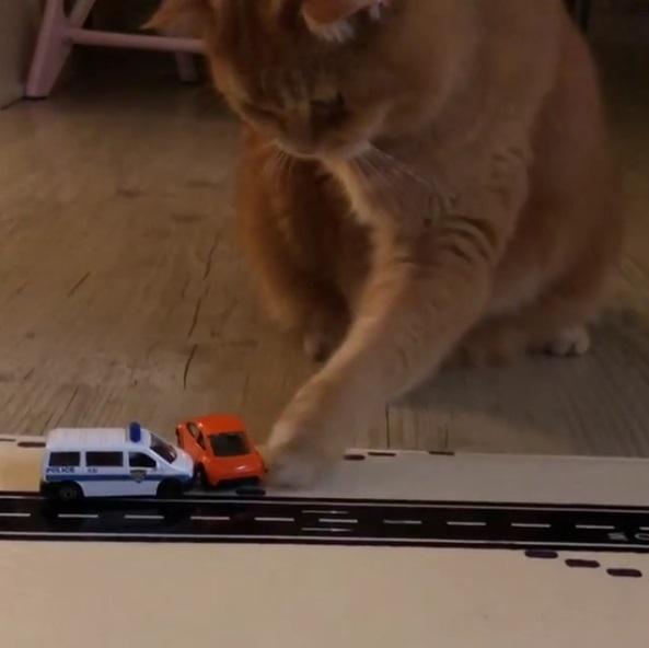 小貓咪目睹事故現場大受驚 動手推掉「違規車輛」:讓救護車你懂不懂!