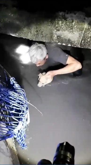 卡排水溝沖2天!幼犬仔「嗚嗚」呼救 徐文良志工跳溝搶救:還好有塑膠籃卡住
