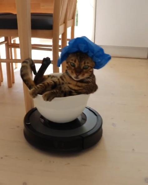 皇上駕到!掃地機器人化身攆轎 貓皇戴浴帽微服出巡:朕乏了…不想動
