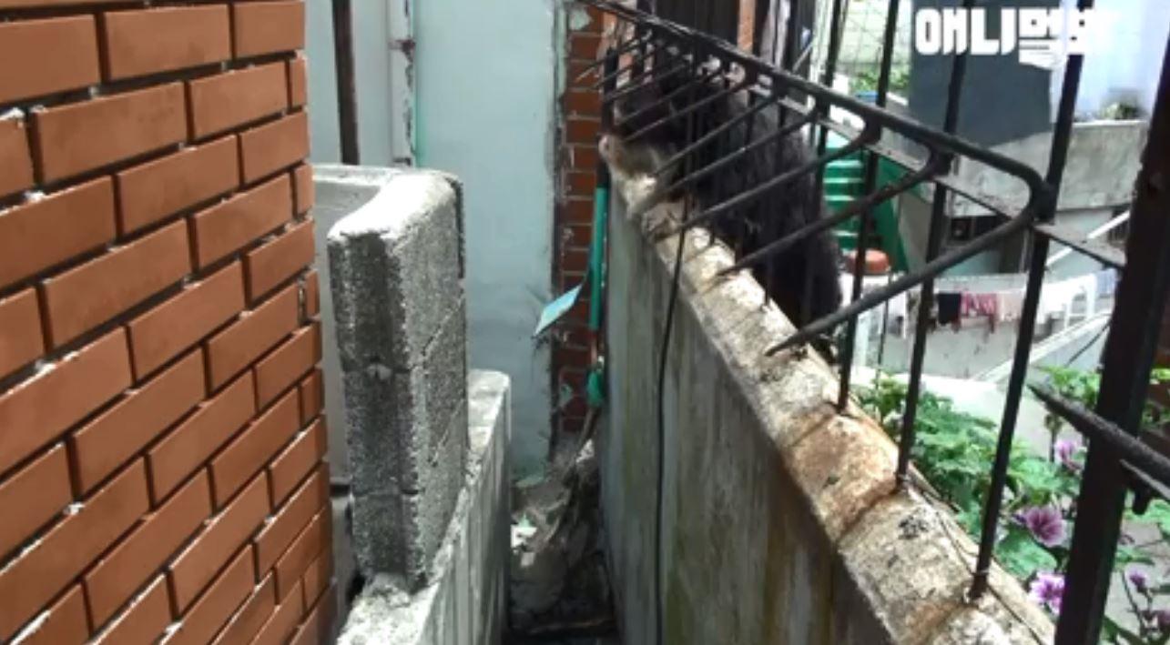 不知道好友已離開...浪浪每天翻牆到鄰居家苦等 飼主心疼:未來我們陪你
