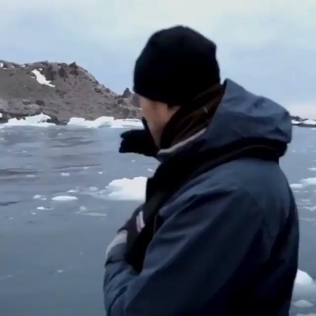 出海遇到奧客搭霸王船!路痴企鵝從海底飛上甲板:我走錯了,bye~