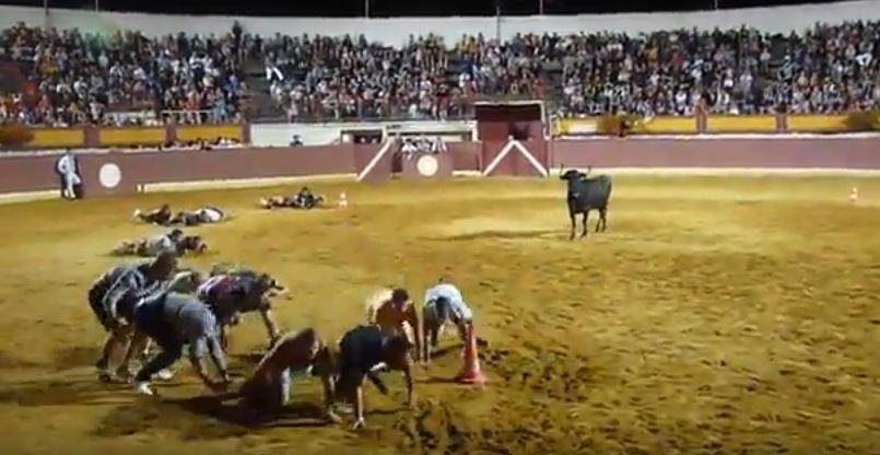 公牛不會欺負弱小?一群路人在競技場玩「鬥牛版123木頭人」:不要玩牛啊XD