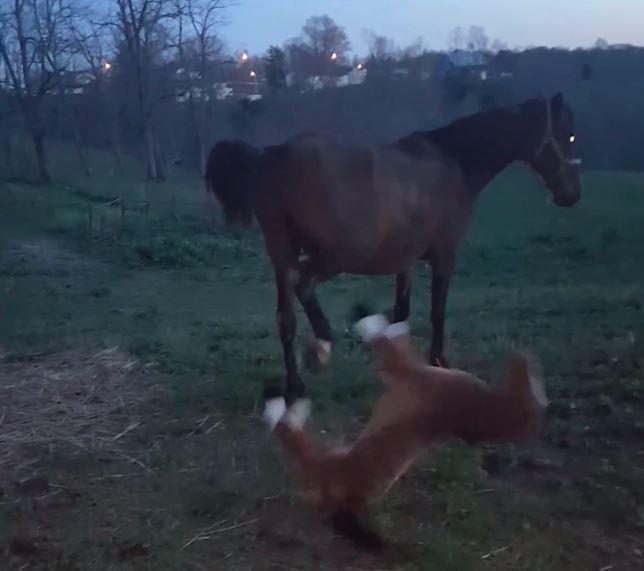 示好後發現朋友是假的 馬暴怒「一腳踢飛」:假貨滾開!