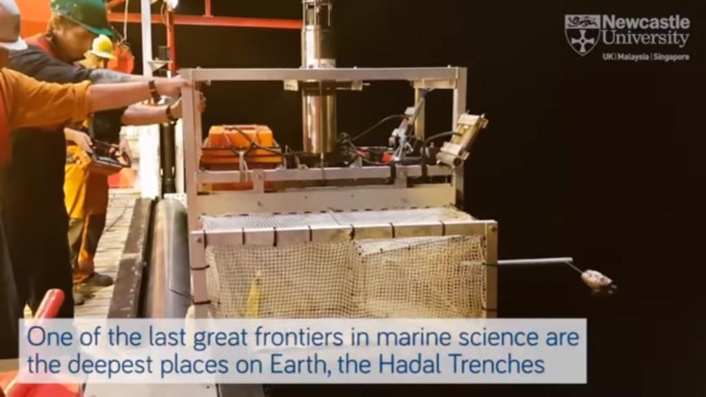 7千公尺深海發現全新「繽紛果凍魚」 抓出水面就融化成粉紅黏稠物!