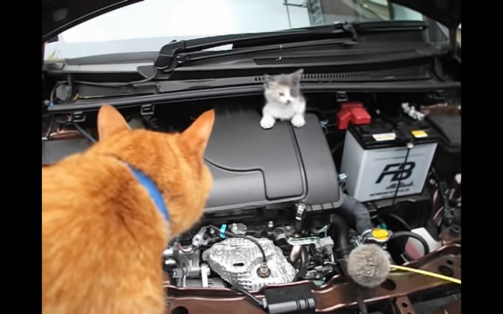 小貓躲引擎蓋無視逗貓棒 鄰居出動橘貓「喵喵語溝通」迅速探頭:偶來惹